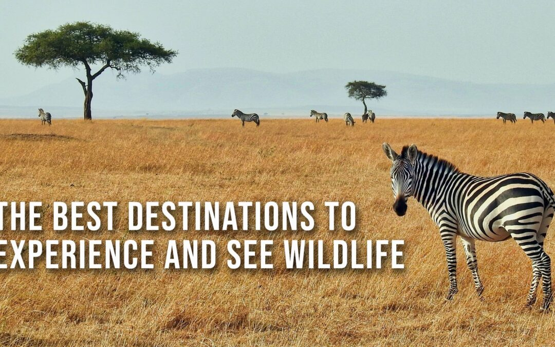 The Best Destinations to Experience and See Wildlife