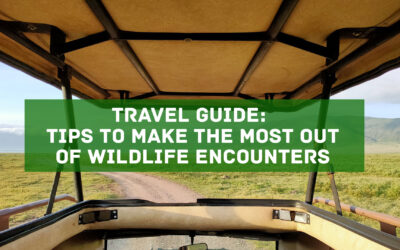 Travel Guide: Tips to Make the Most Out of Wildlife Encounters